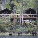 Bear Camp (low res) 2